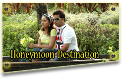 Make My Munnar Honeymoon