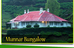 munnar-honeymoon-bunglow
